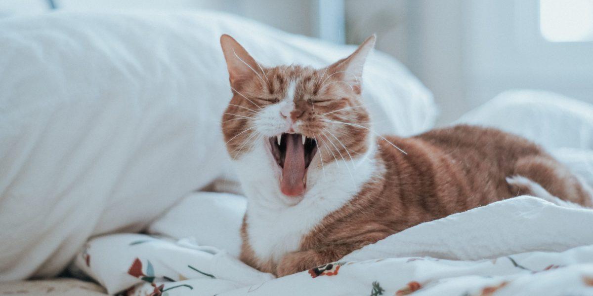 reminder20-yawning