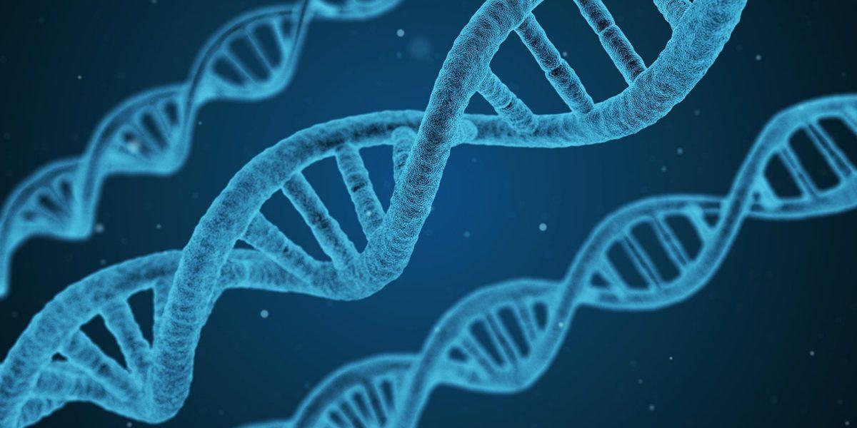reminder39-telomeres
