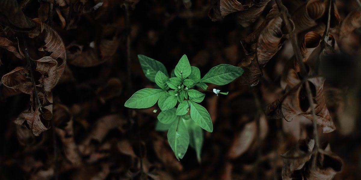 reminder46-growth